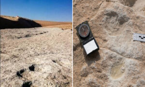 Discovered series of human footprints 120,000 years old